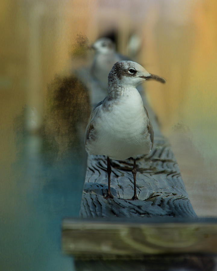 The Seagull by Jolynn Reed