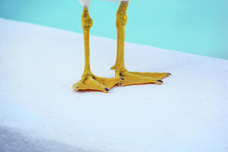 The Seagulls Feet - Minimalism Photograph