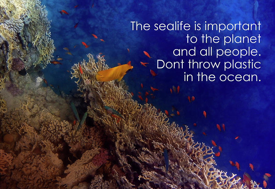 The Sealife Is Important To The Planet And All People by Johanna Hurmerinta
