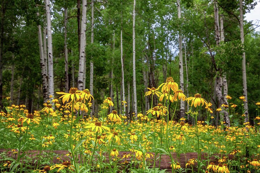 The Secret Garden by Rick Furmanek