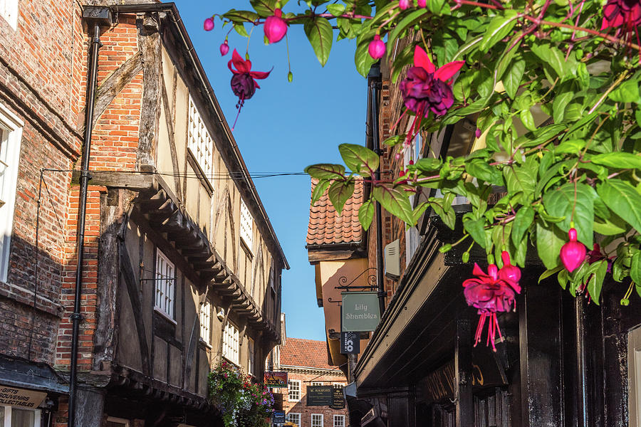 The Shambles Photograph - The Shambles, York by David Ross