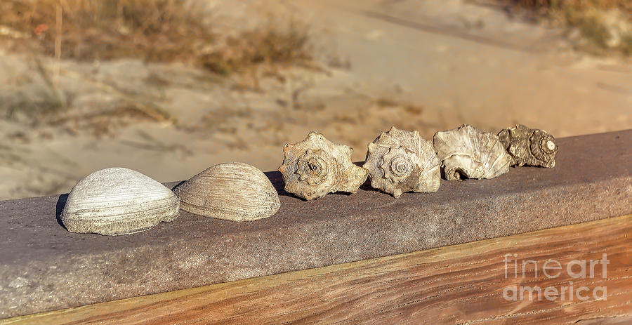 The Shell Collection by Kathy Baccari
