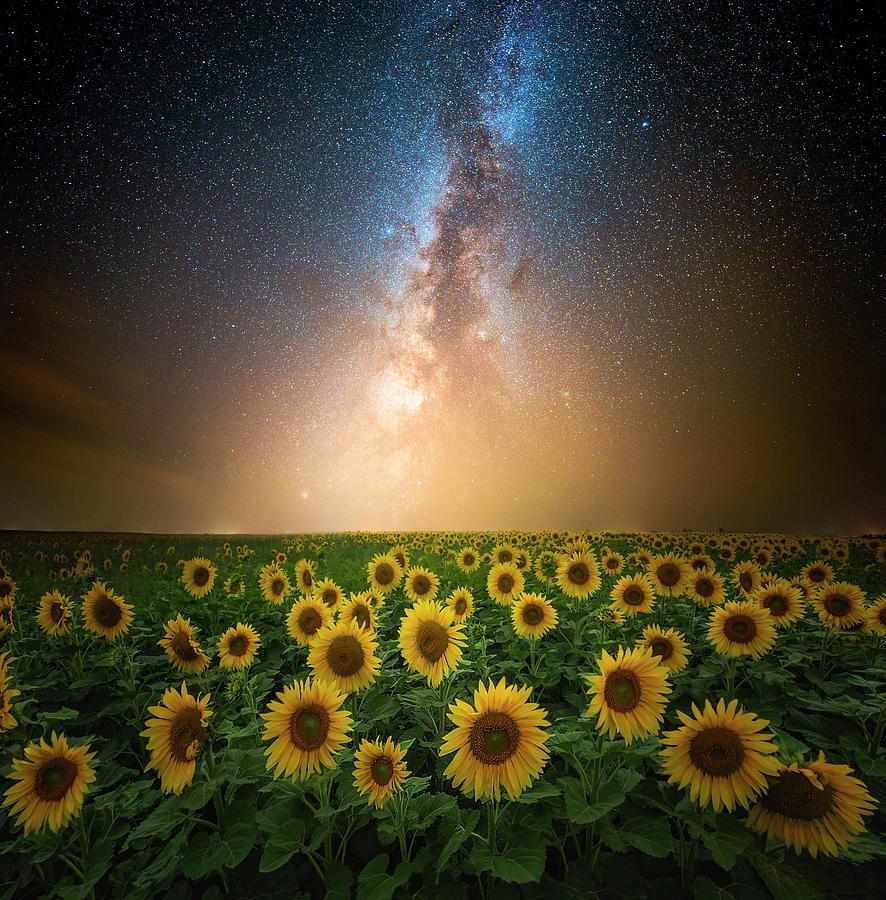 Sunflowers Photograph - The Sky Is A Neighborhood  by Aaron J Groen