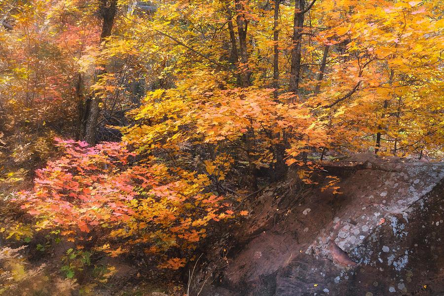 The Soft Colors Of Autumn  by Saija Lehtonen