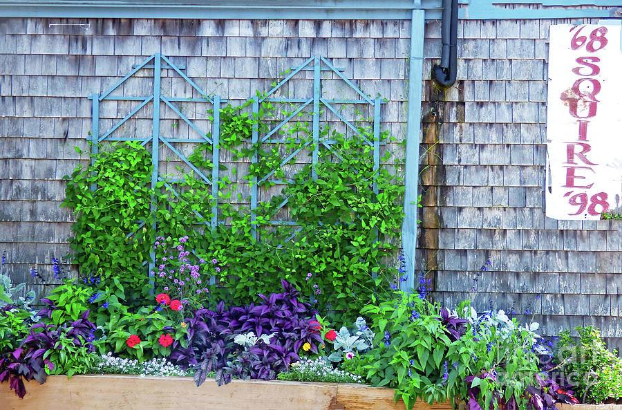 The Squire Anniversary Garden 300 Photograph
