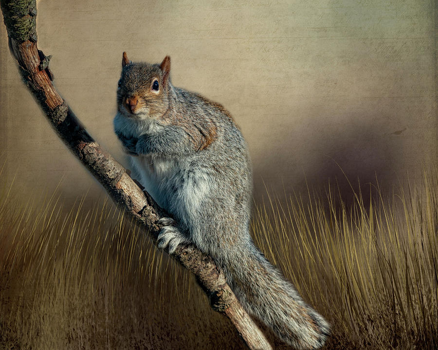 The Squirrel by Cathy Kovarik