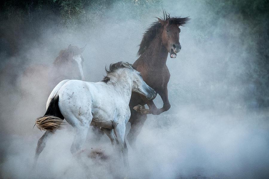 The Stallion Dance  by Saija Lehtonen