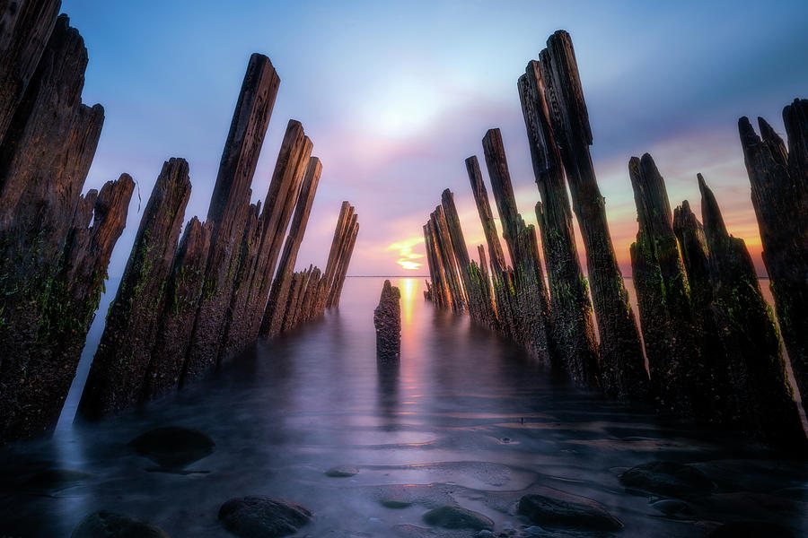 The Sticks by John Randazzo