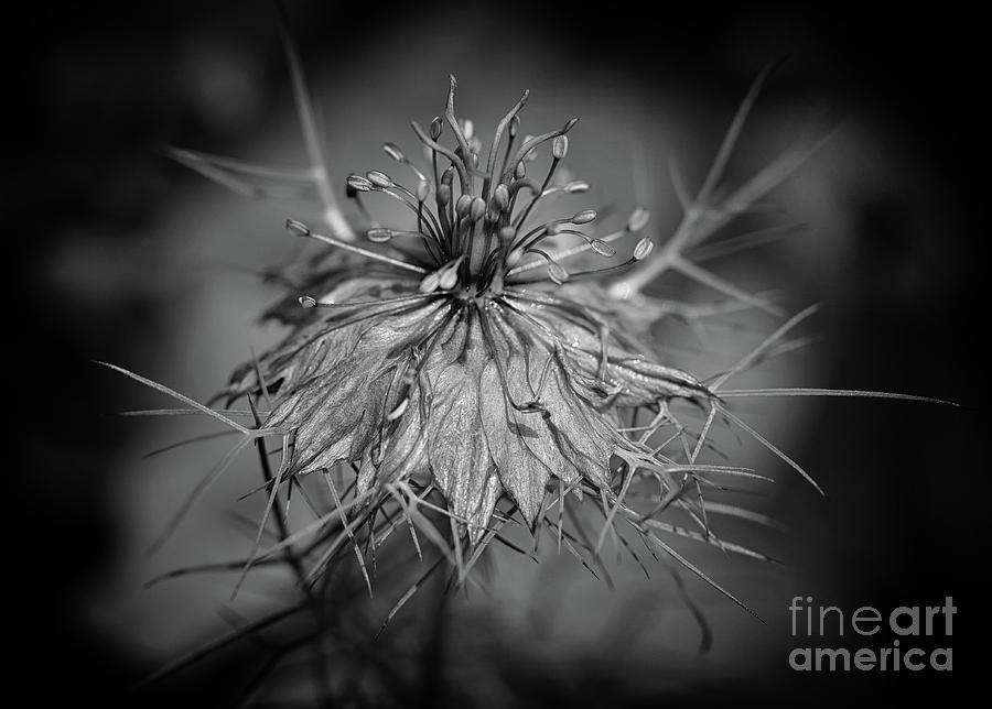 The Structure of Love in a Mist by Karen Adams