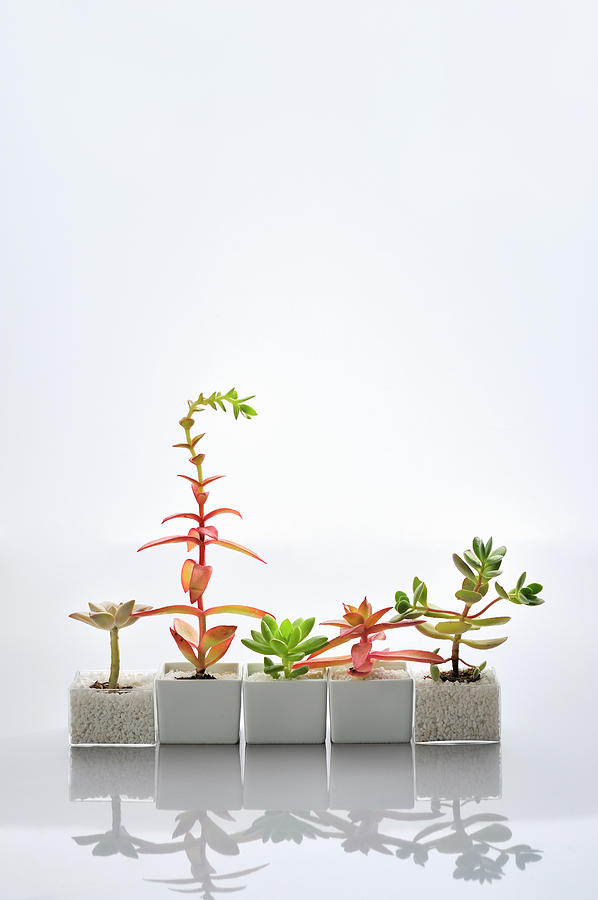 The Succulent Plants Of The Various Photograph by Yagi Studio