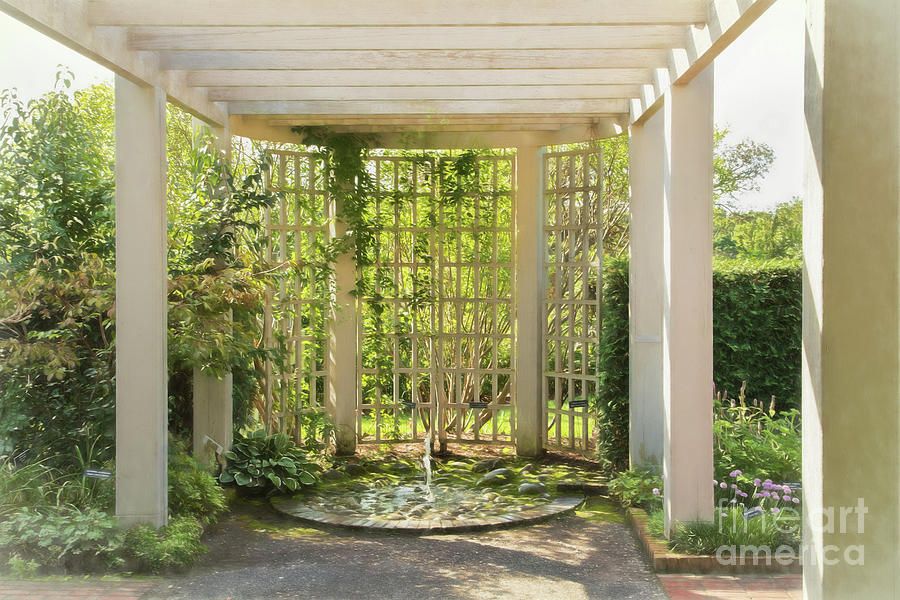 Botanic Gardens Photograph - The Sun Glows Through by Marilyn Cornwell