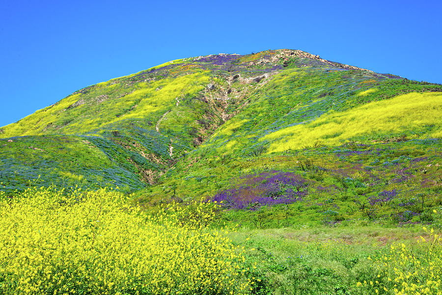 The Superbloom Hits the Malibu Hills by Lynn Bauer