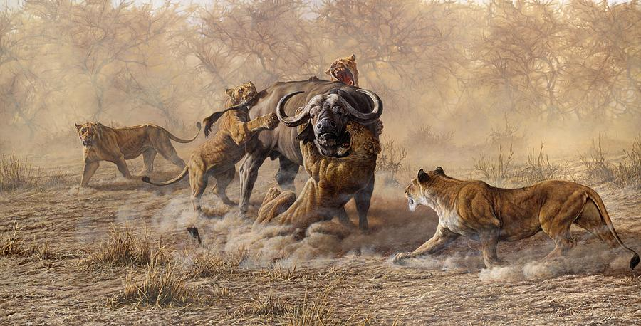 The Take Down - Lions Attacking Cape Buffalo by Alan M Hunt