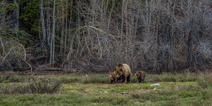 The Three Bears by Yeates Photography