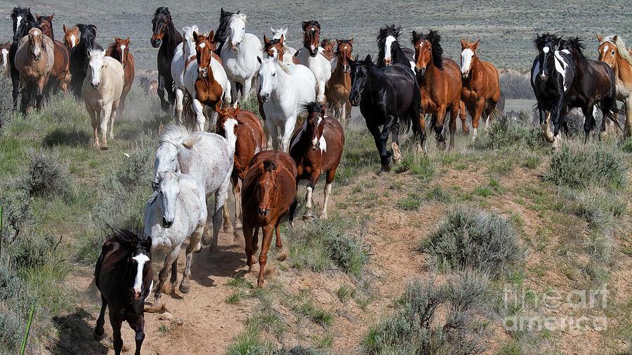 The Thundering Herd by Jim Garrison