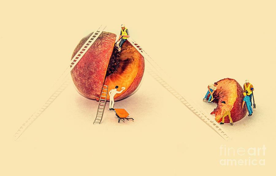 The Tinned Fruit Company by Sandra Cockayne ADPS