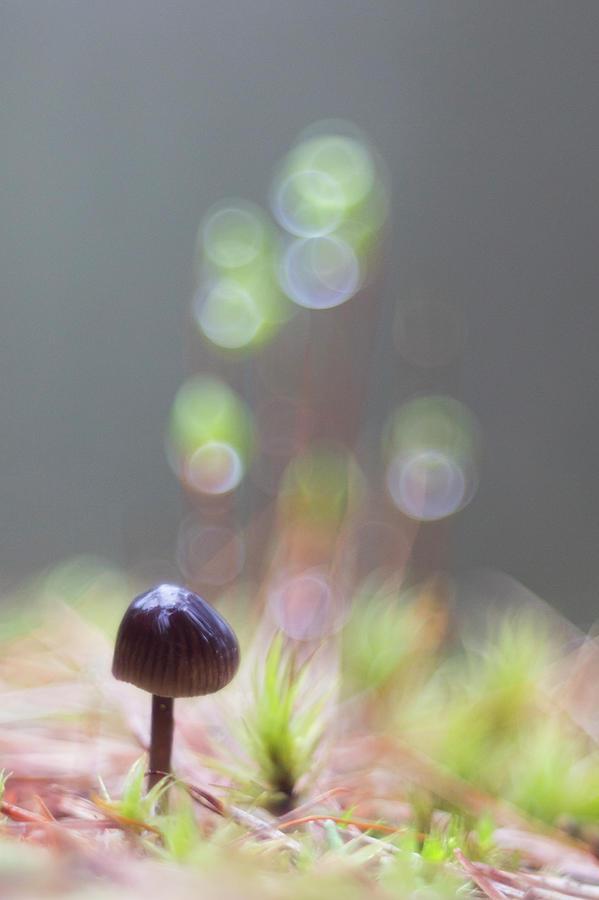 The Tiny Toadstool by Karen Van Der Zijden