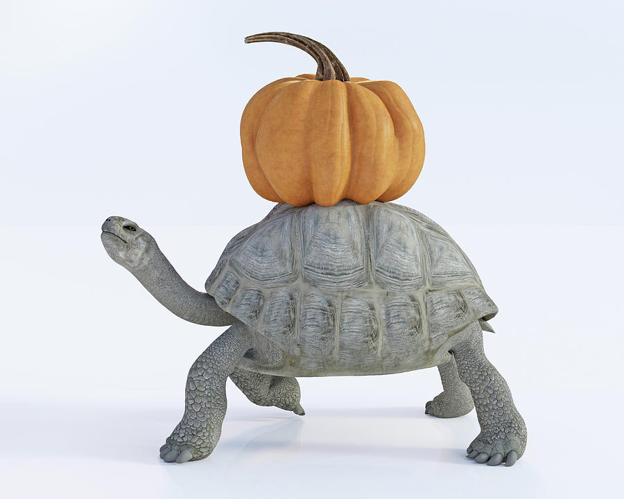 Turtle Digital Art - The Tortoise And The Pumpkin by Betsy Knapp
