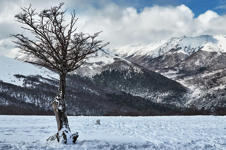 The tree and the beautiful snowy paradise by Eduardo Jose Accorinti