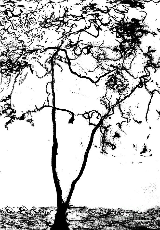 The Tree Black and White Drawing 300 by Sharon Williams Eng