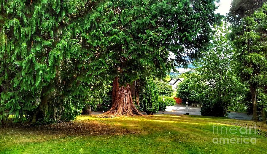 The tree Garden at Tweedside by Joan-Violet Stretch