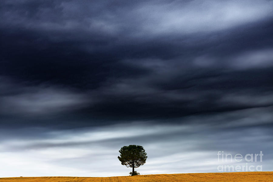 Nature Photograph - The Tree Under The Storm by Vicente Sargues