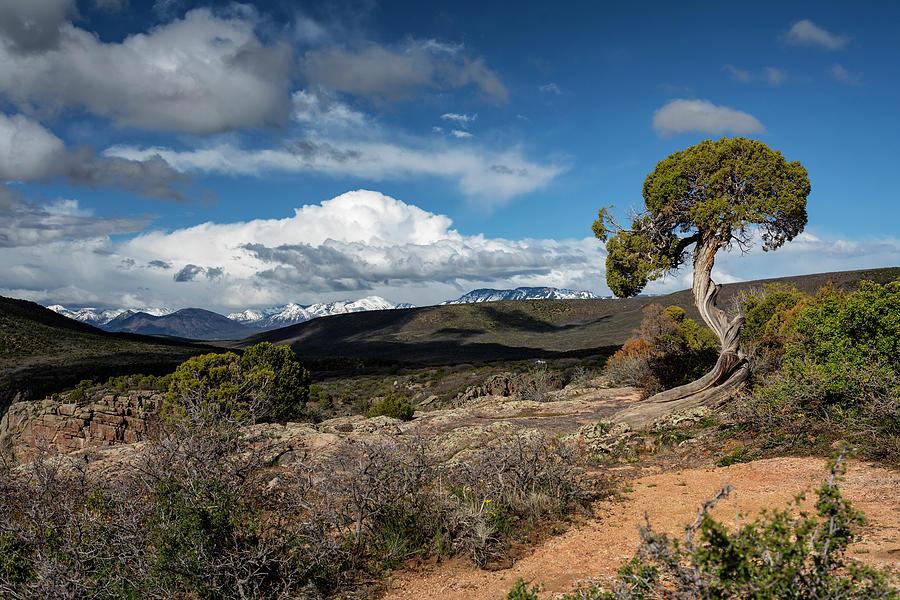 The Twisted Tree Vista by Lisa Malecki