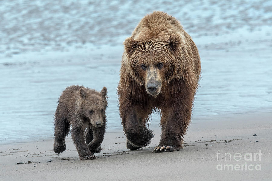 The Two Of Us-Lake Clark, AK by Sandra Bronstein