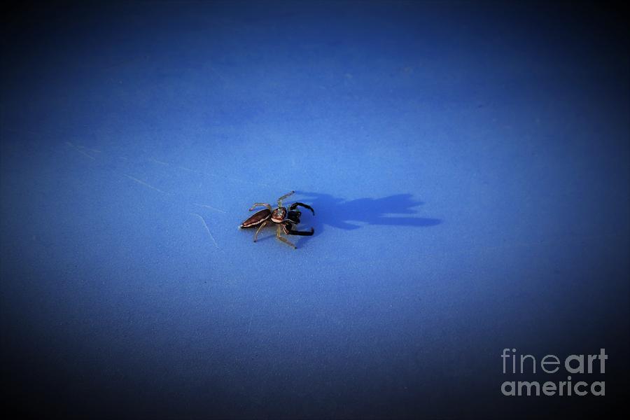 The Unknown Beach Spider by Karen Silvestri