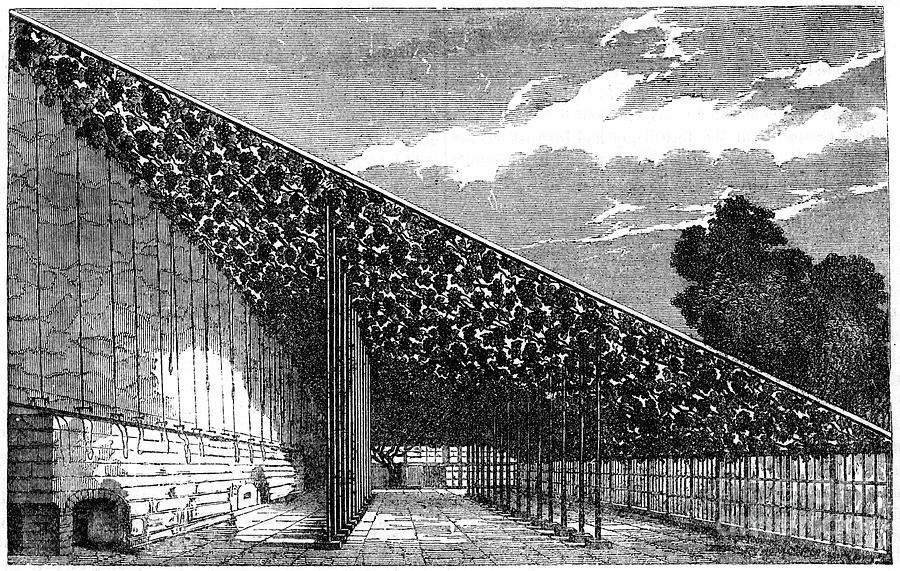 The Vinery At Hampton Court, 19th Drawing by Print Collector