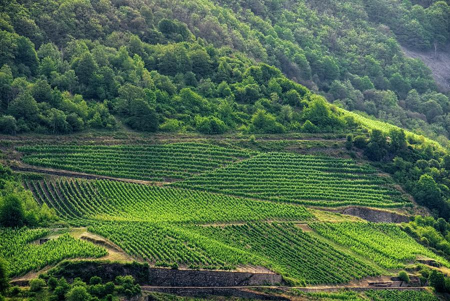 The Vineyards Along The Rhine River by Lucinda Walter
