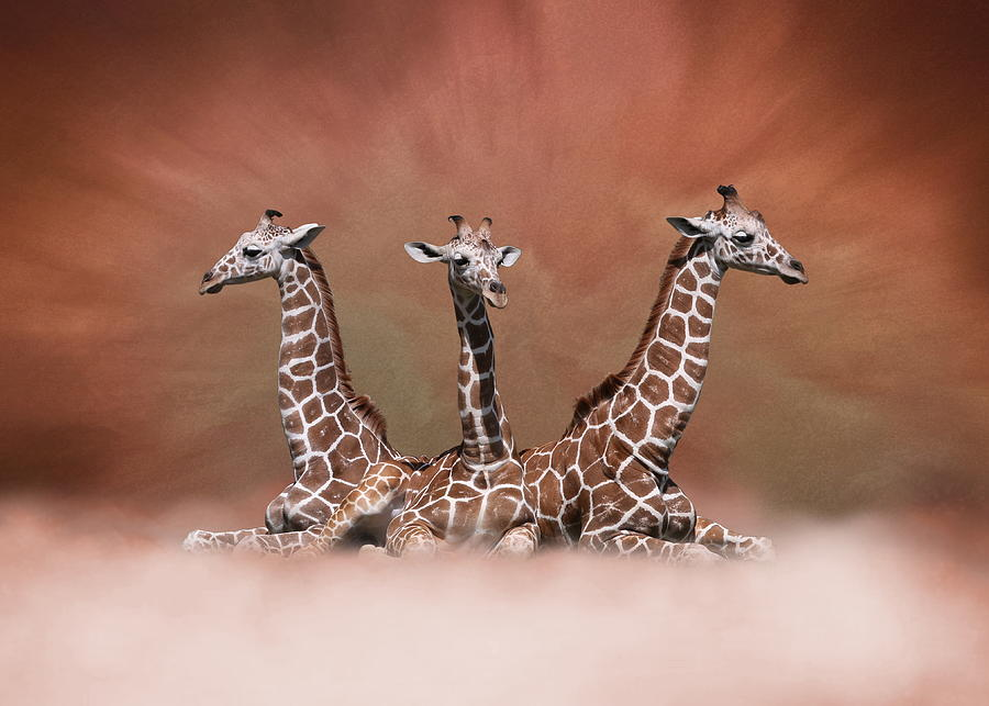 The Watchers - Three Giraffes by Debi Dalio