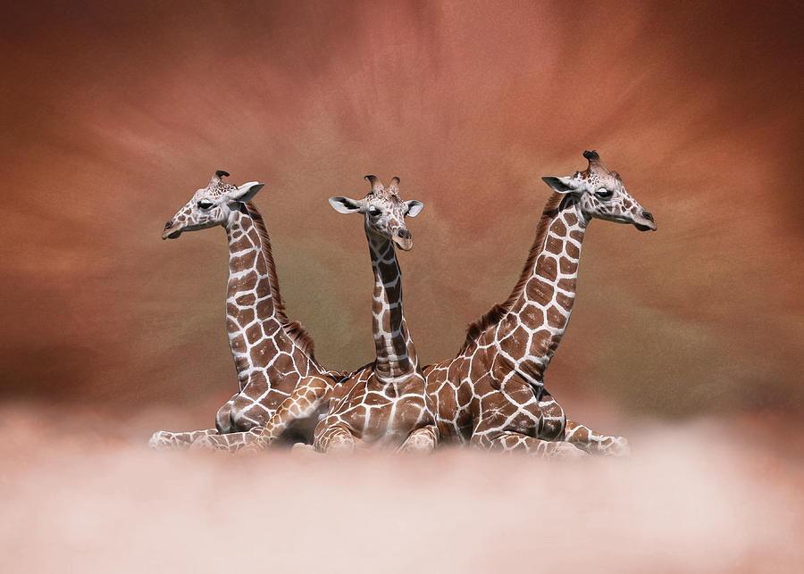 The Watchers - Three Giraffes by Debi Dalio