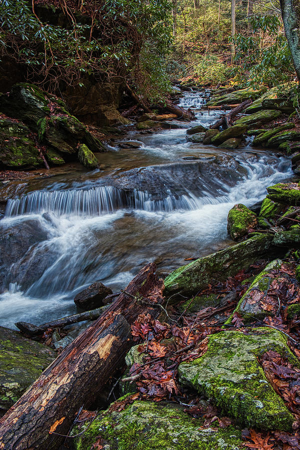 The Water Flows by Mark Dodd
