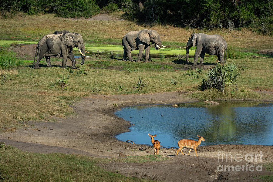 The Water Hole Photograph