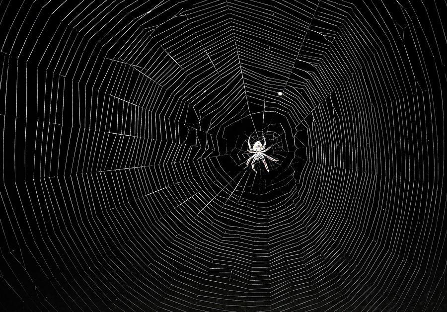 The Web Photograph
