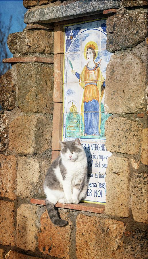 The Welcome Cat Civita di Bagnoregio Italy by Joan Carroll