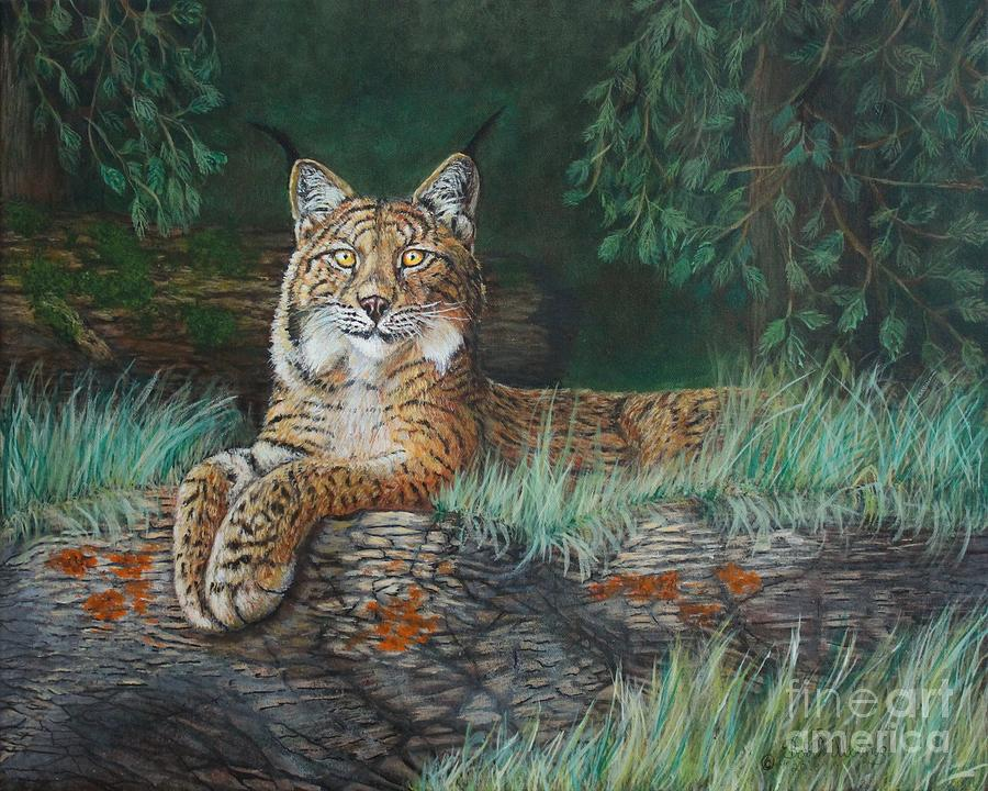The Wild Cat  by Bob Williams