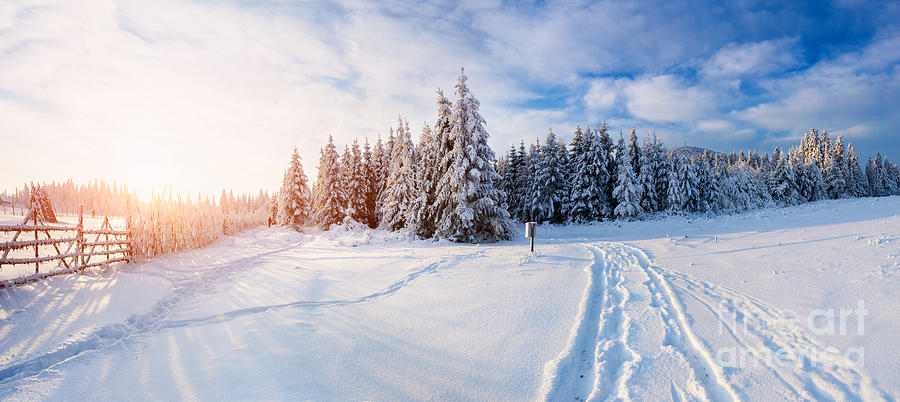 Forest Photograph - The Winter Road by Standret