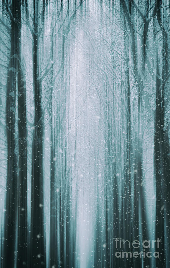 The Winter Wood by David Lichtneker