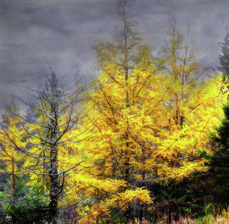 The Wolf Tree and the Tamarack by Wayne King