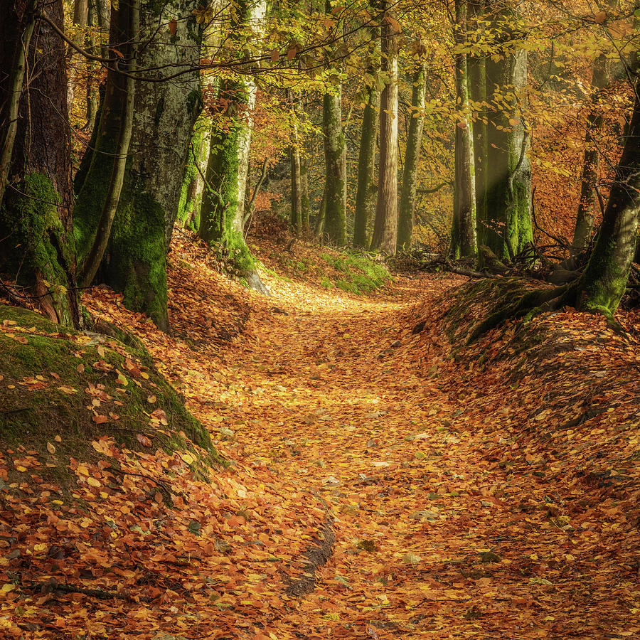 The Yellow Leaf Road Photograph