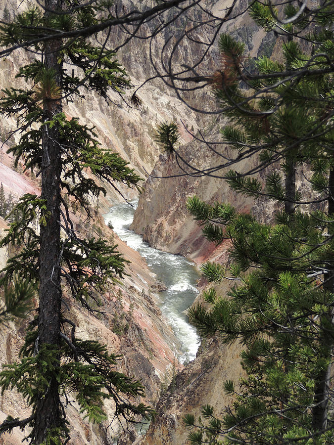 The Yellowstone River Seen through the Pines by Jayne Wilson