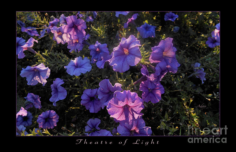Purple Flowers Photograph - Theatre of Light Horizontal Poster by Felipe Adan Lerma