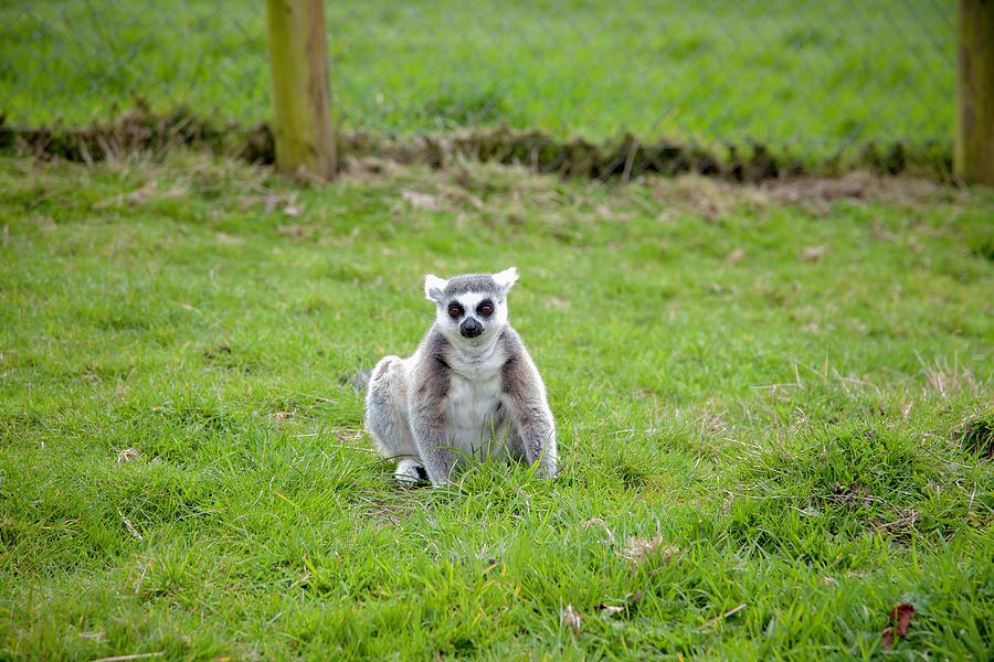 Them Pesky Lemurs by Cheltenham Media