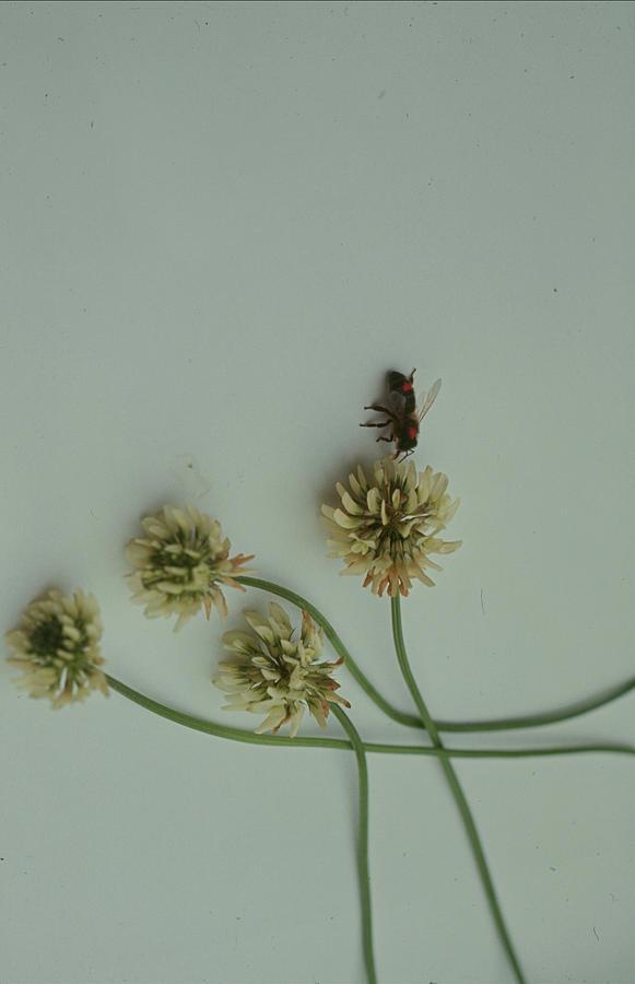 Theodore C Schneirla -- Study Of Ants Photograph by Nina Leen