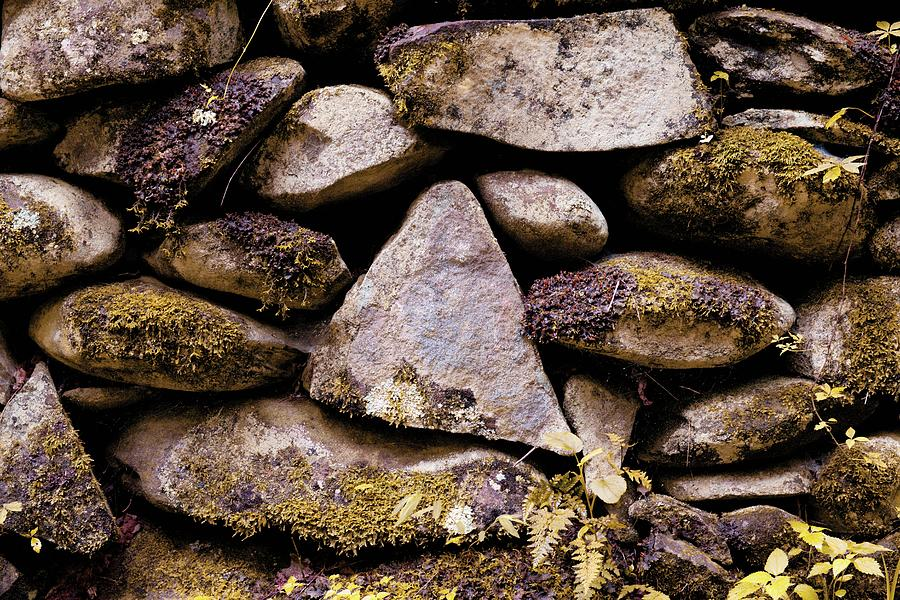 This Stone Stands out in a Crowd by T Lynn Dodsworth