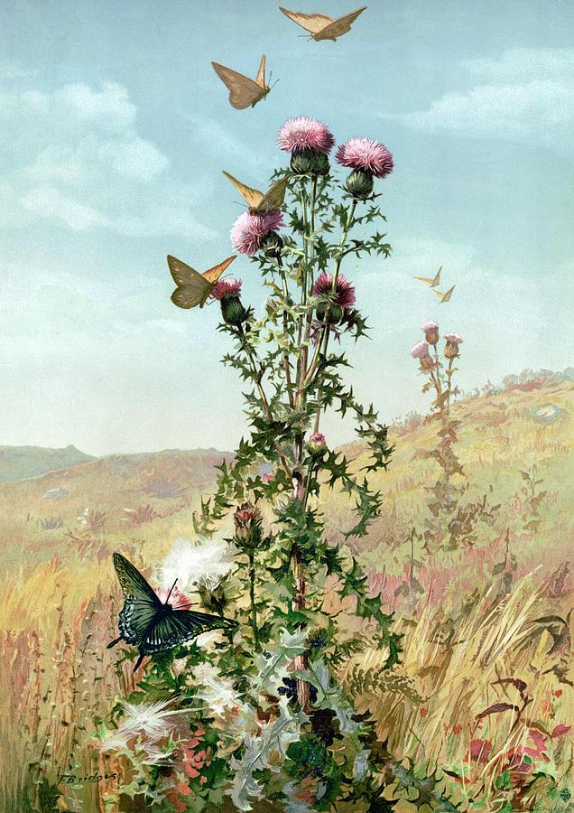 Thistle 1886 Painting By Fidelia Bridges