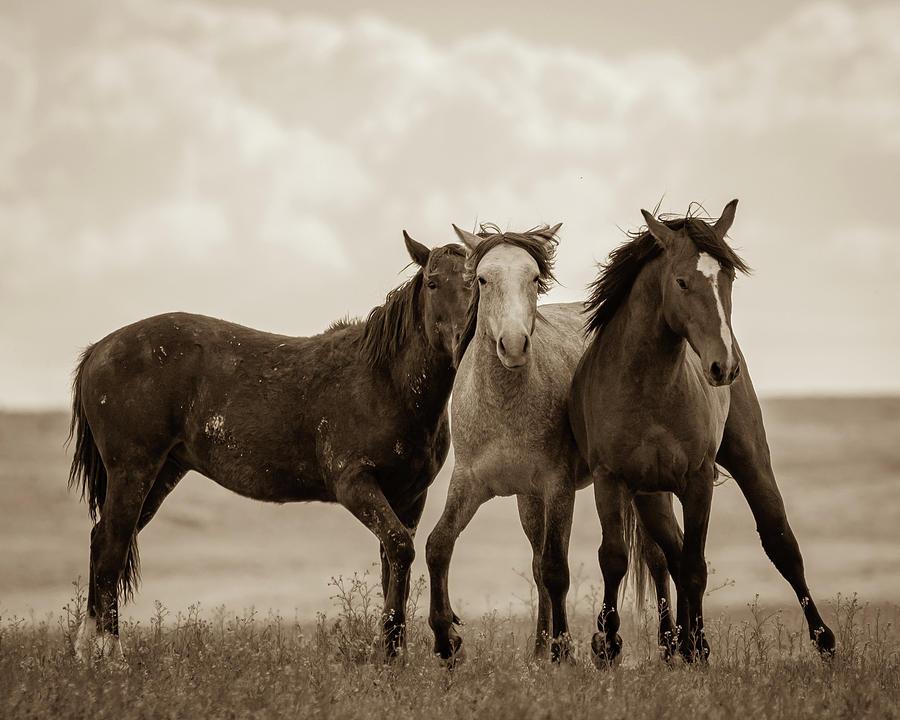 Three Amigos by Mary Hone