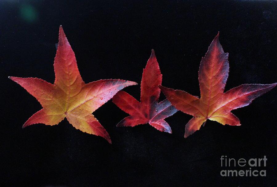 Three Amigos or Amigas by Marie Neder
